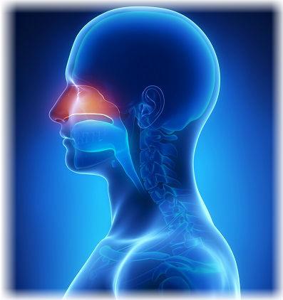 ЛОР заболевания ухо, горла, носа - все про лечение, симптомы и причины появления