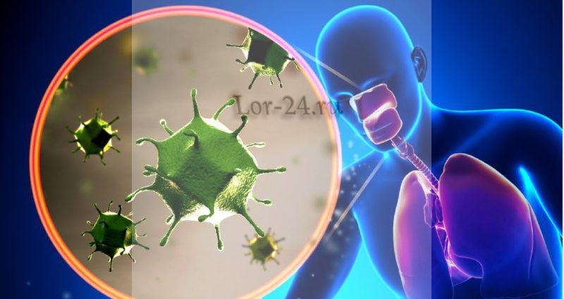 Rinovirusnaya infektsiya