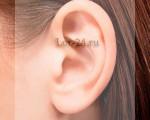 Биологически активные точки на ушах: расположение, влияние на органы, массаж