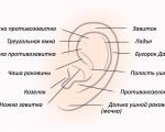Как устроено наружное ухо у человека: анатомическое строение и функции