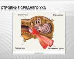 Строение среднего уха, функции, возможные заболевания, диагностика и лечение