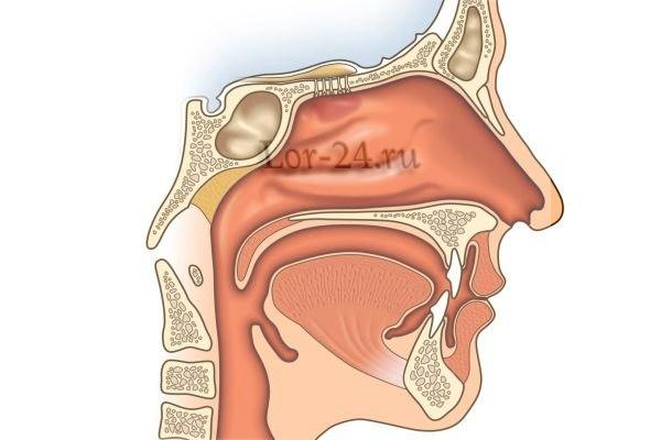 rak nosoglotki
